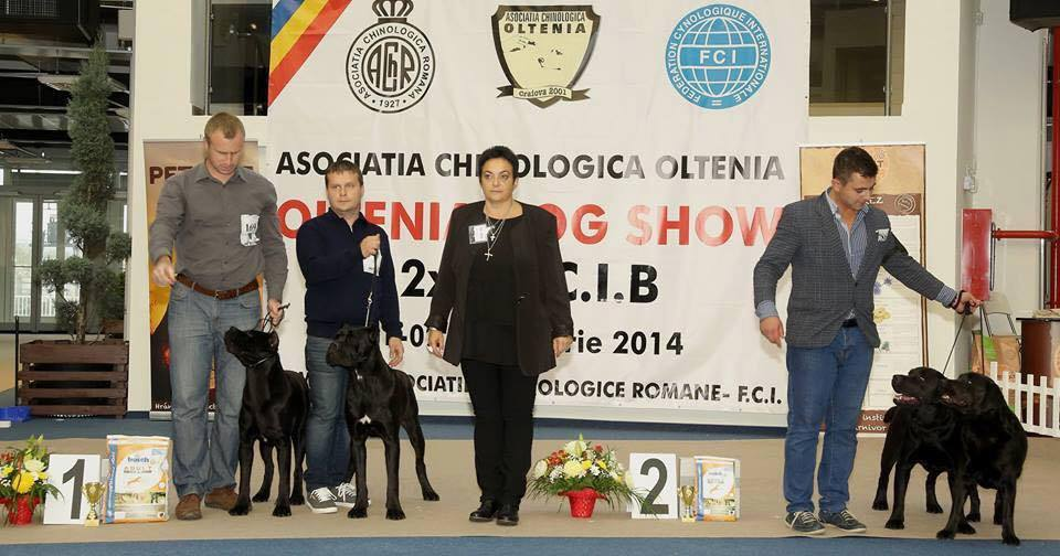 Mou and Queenie 2nd Best Brace in Show