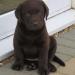 Rooney puppy